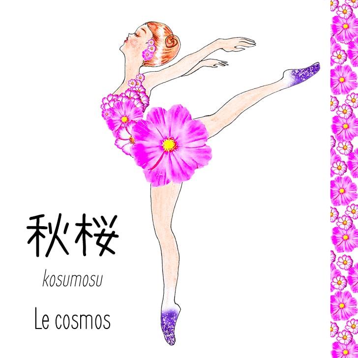 Kosumosu (Fleur Japonaise) : Le cosmos