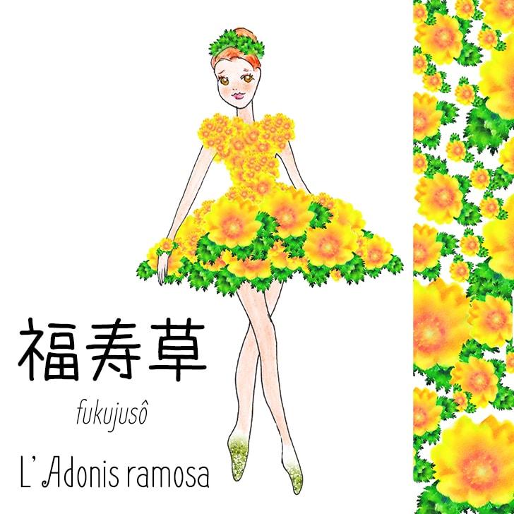 Fukujusô (Fleur Japonaise) : L'Adonis ramosa