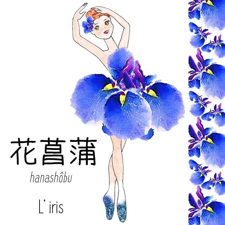 Hanashôbu (Fleur Japonaise) : L'iris