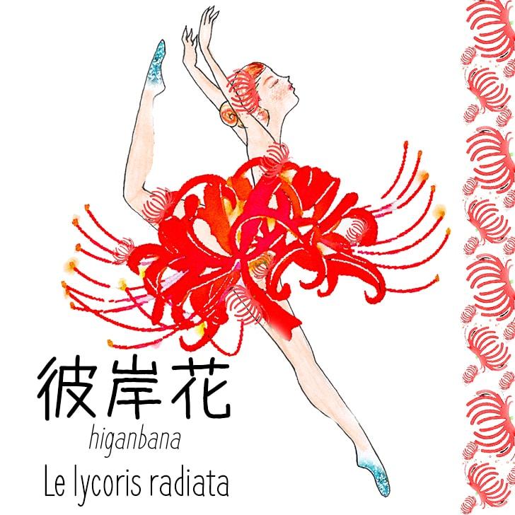 Higanbana (Fleur Japonaise) : Le lycoris radiata