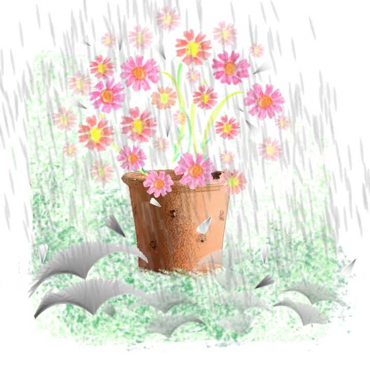 Fleurs cosmos roses sous la pluie