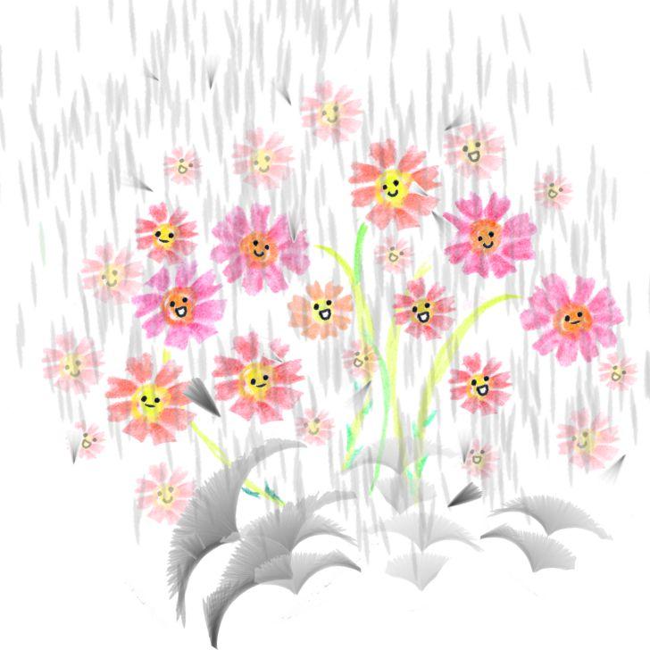 Fleurs cosmos roses mignonnes